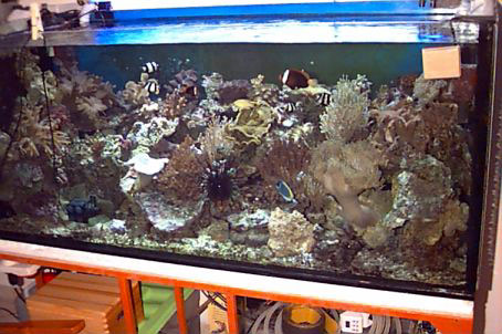 L'acquario di Sandro Riente