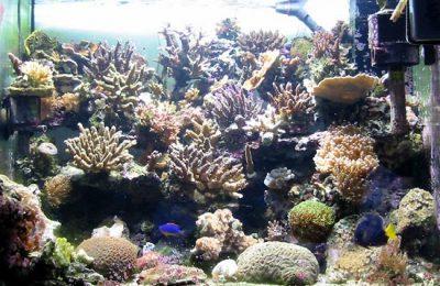 acquario di Gilberto Hassan