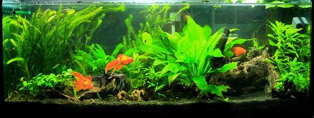 L 39 acquario di marco cagianelli for Acquario per pesci rossi
