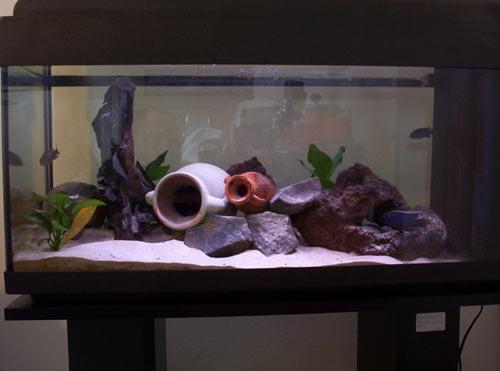 acquario di Osvaldo Iannacone