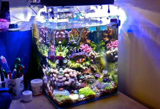 acquario di Nicola Musacchio