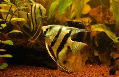 acquario biotopo Amazzonico