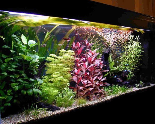 Arredamento dell acquario piante e arredamento di for Acquario arredamento