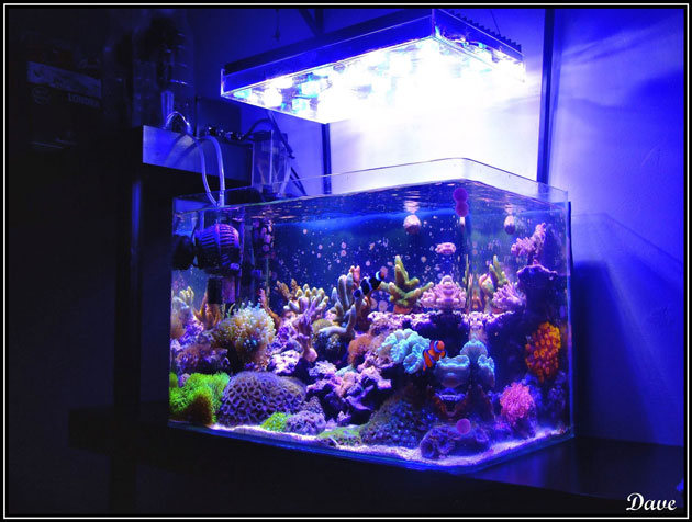 L'acquario di Davide Silvi
