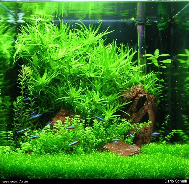 Vita morte e miracoli dell 39 acquario di piante for Piante da acquario