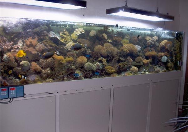 Plafoniere Hqi Per Acquario Marino : L acquario di marco guarnieri