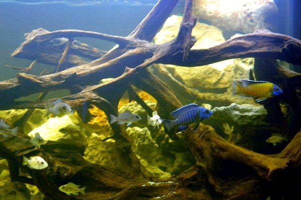 L'acquario di Vittorio Peruzzi