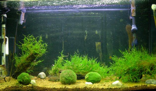 Un acquario in terra akadama ospita muschi e cladophore per creare un layout idoneo per piccoli pesci o caridine