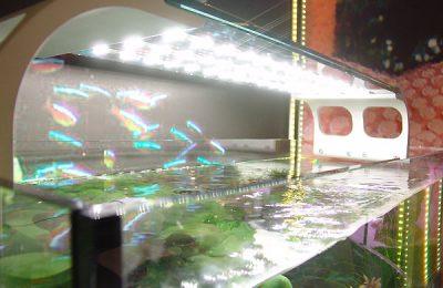 illuminazione in acquario
