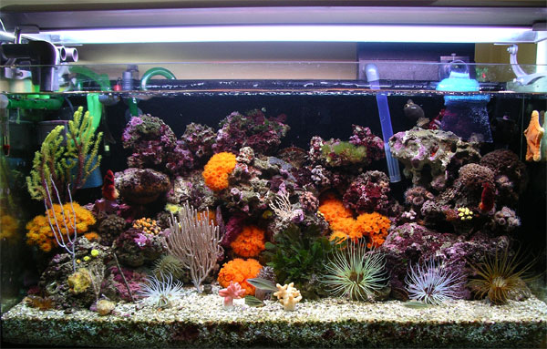 acquario di Pietro Astone
