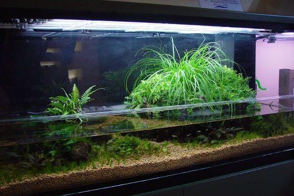 Tipi di acquari e biotopi testo di gabriele andreoni tipi for Arredamenti per acquari
