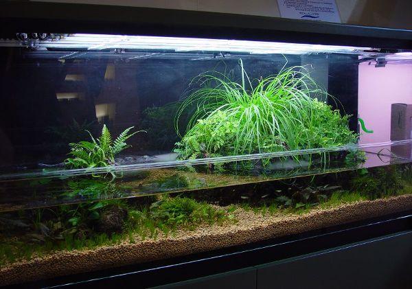 tipi di acquari e biotopi testo di gabriele andreoni tipi di ... - Allestimento Acquario Per Betta Splendens