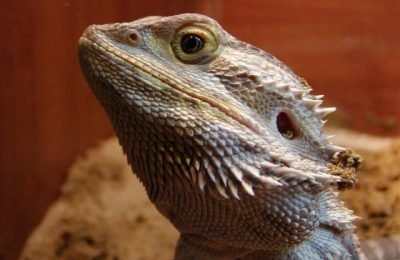 Longarone Reptiles Day