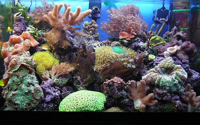 acquario di Pietro Cremone
