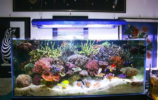 acquario di Johnny Toti