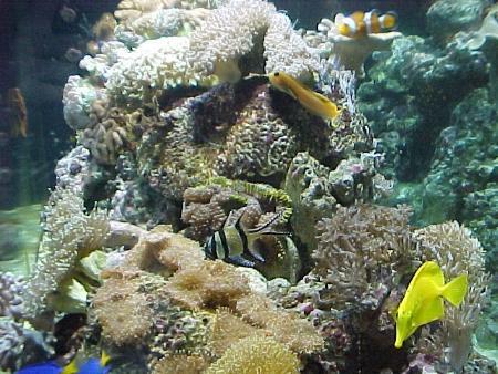 acquario di Luca Dall'Alba