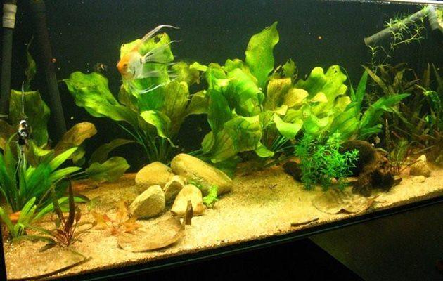 acquari con pochi pesci