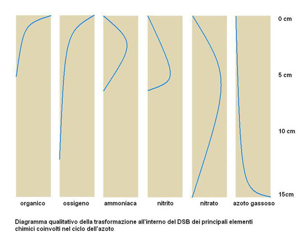 diagramma dsb