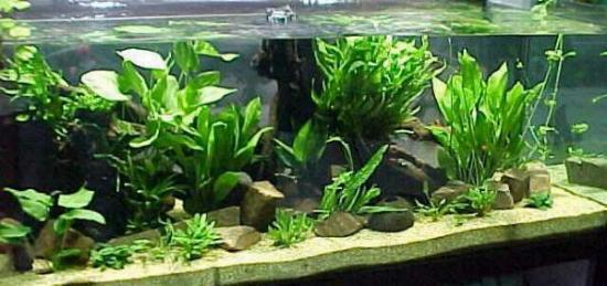 acquario di Marco Milanesi