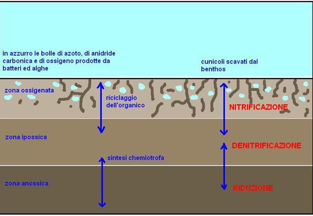 Schema della suddivisione del DSB