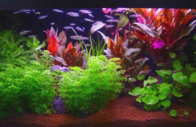 Come realizzare un acquario