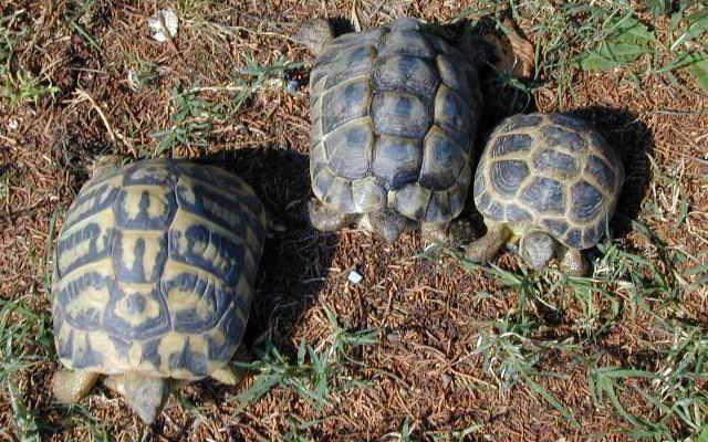 allevare le tartarughe