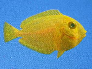 riproduzione di animali marini