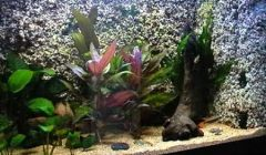 sfondo 3D per acquario