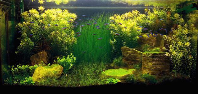 acquario di Edoardo Rocchi
