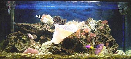 L'acquario di Enrico Bernardini