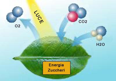 Anidride carbonica in acquario