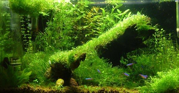 acquario di Niomix