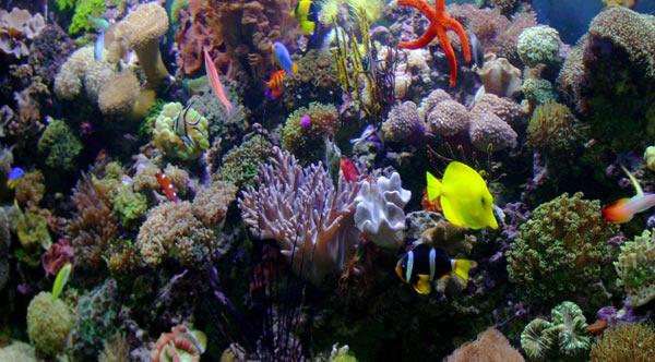 L'acquario di Fulvio Roman