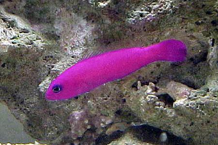 Pesci per acquario marino tropicale casamia idea di immagine - Pesci e acquario a letto ...