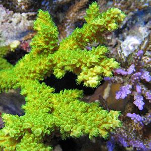 acquario di sebastiano orofino