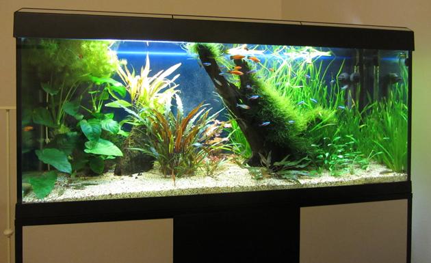 acquario di Francesco Niger