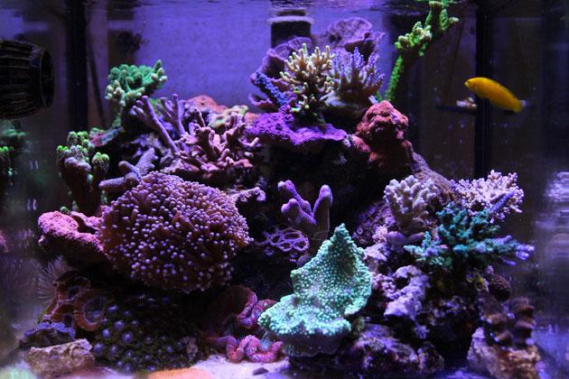 L'acquario di Cardo Ferri