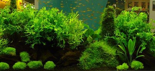 allevamento delle piante d'acquario