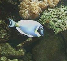 acquario di Giuseppe Sparacino