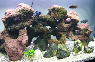 acquario di Giuseppe Genovese