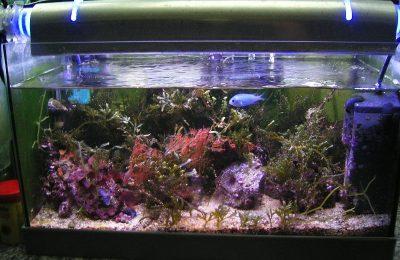 L'acquario di Roxy