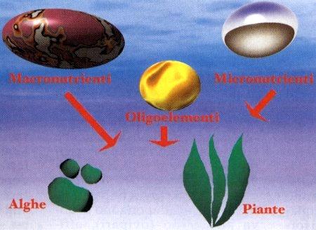 I CSC di alcuni substrati da fondo Maggiore è il valore CSC (Capacità di Scambio di cationi), migliori saranno le prestazioni del substrato di fondo nel cedere lentamente nutrienti alle radici. Alcuni materiali, pur avendo elevati valori CSC, possono produrre inquinamento dell'acqua, avendo un forte contenuto in materia organica: dovranno quindi essere utilizzati con moderazione. Ecco una tabella che ci dice il grado di CSC di alcuni materiali per il substrato:  Substrato CSC meq/100g Perlite 1,5 – 3,5 Sabbia 3,0 – 7,0 Ghiaia 22,0 – 63,0 Torba 53,0 Vermiculite 82,0 – 150,0 Ghiaietto fertilizzato 100,0 – 180,0 Humus 200,0