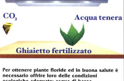 fertilizzanti in acquario