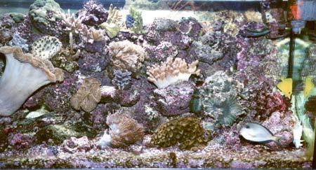 acquario di Mauro Aloisi