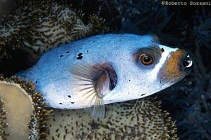 Sistematica dei pesci