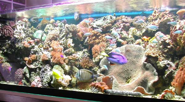 Acquario 5000 litri casamia idea di immagine for Acquario marino 300 litri prezzo
