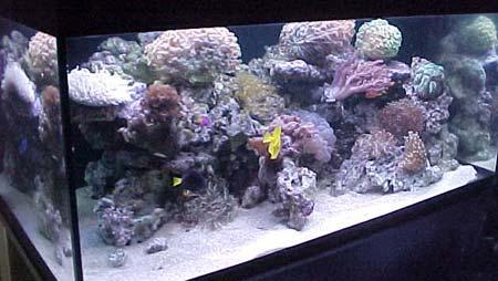 L'acquario di Manuel Caporicci