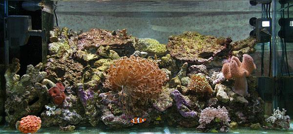 acquario-sebastiano-orofino