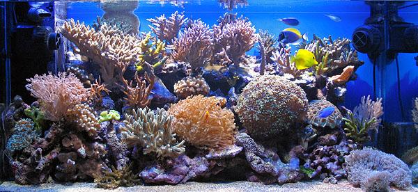 Acquario tropicale marino costi casamia idea di immagine for Acquario completo prezzi