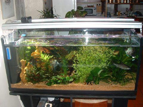 acquario di Giorgio Vanzani